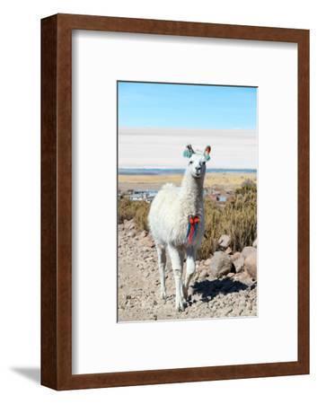 Llama with Uyuni Salt Flats-jkraft5-Framed Photographic Print