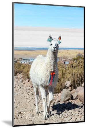 Llama with Uyuni Salt Flats-jkraft5-Mounted Photographic Print