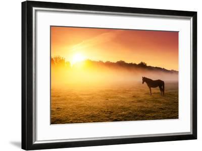 Arabian Horses Grazing on Pasture at Sundown in Orange Sunny Beams. Dramatic Foggy Scene. Carpathia-Leonid Tit-Framed Photographic Print