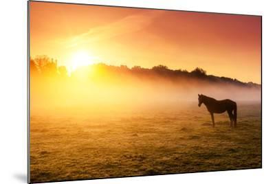 Arabian Horses Grazing on Pasture at Sundown in Orange Sunny Beams. Dramatic Foggy Scene. Carpathia-Leonid Tit-Mounted Photographic Print