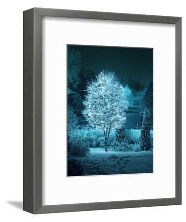 Illuminated Tree in Winter Garden-Hannuviitanen-Framed Photographic Print