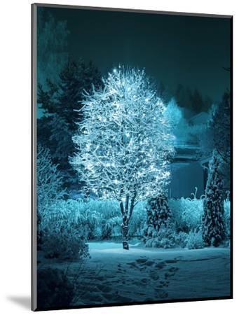 Illuminated Tree in Winter Garden-Hannuviitanen-Mounted Photographic Print