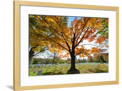 Arlington National Cemetery near to Washington Dc, in Autumn-Orhan-Framed Photographic Print