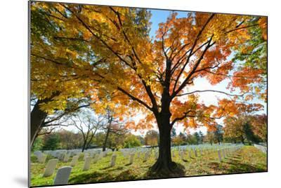 Arlington National Cemetery near to Washington Dc, in Autumn-Orhan-Mounted Photographic Print