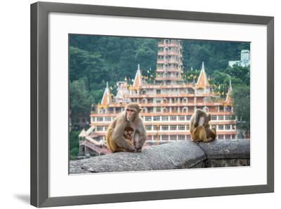 Indian Macaque Monkeys-asaf eliason-Framed Photographic Print