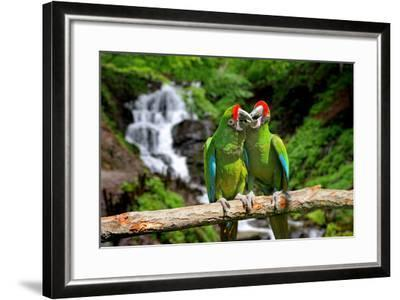 Parrot against Tropical Waterfall Background-byrdyak-Framed Photographic Print