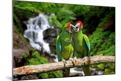 Parrot against Tropical Waterfall Background-byrdyak-Mounted Photographic Print