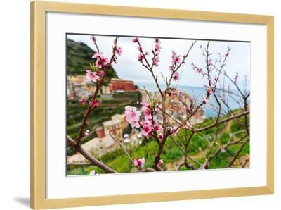 Spring Blooming Cherry Tree with Background Scenic View of Colorful Houses of Manarola Village, Cin-BlueOrange Studio-Framed Photographic Print
