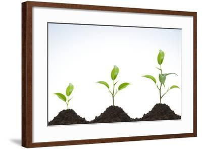 Evolution of A Young Plant-agencyby-Framed Photographic Print