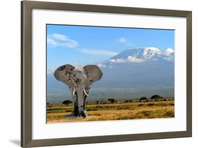 Elephant-byrdyak-Framed Photographic Print