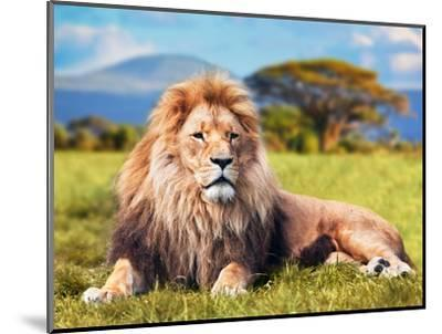 Big Lion Lying on Savannah Grass. Landscape with Characteristic Trees on the Plain and Hills in The-Michal Bednarek-Mounted Photographic Print