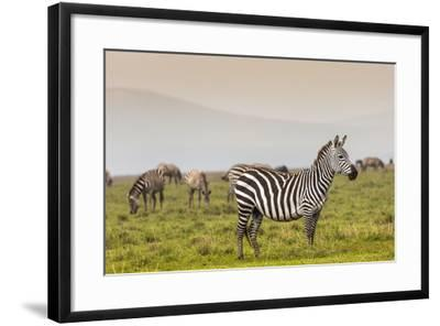 Zebra in National Park. Africa, Kenya-Curioso Travel Photography-Framed Photographic Print