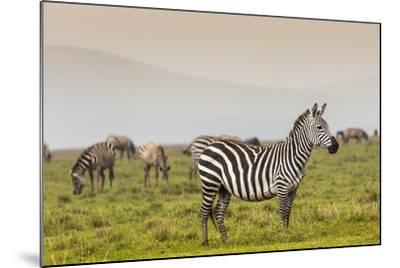 Zebra in National Park. Africa, Kenya-Curioso Travel Photography-Mounted Photographic Print