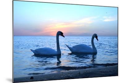 Swans-lindama-Mounted Photographic Print