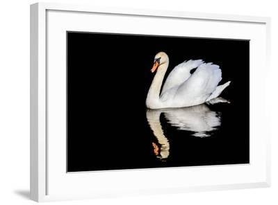 Swan with Reflection-Alan Tunnicliffe-Framed Photographic Print
