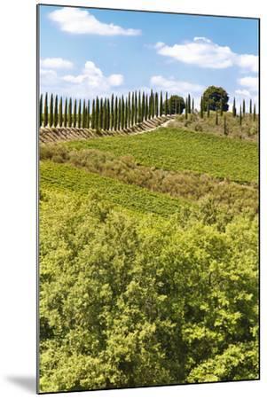 Montalcino-lachris77-Mounted Photographic Print