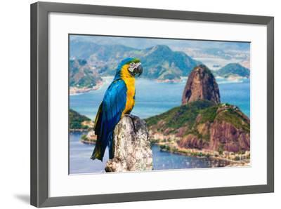 Blue and Yellow Macaw in Rio De Janeiro, Brazil-Frazao-Framed Photographic Print