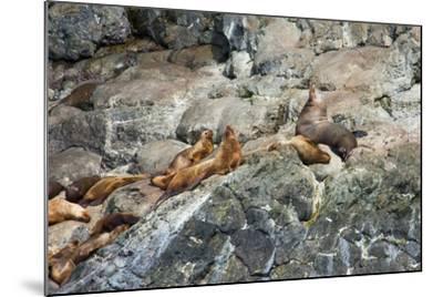 Sea Lions on Rock-Latitude 59 LLP-Mounted Photographic Print