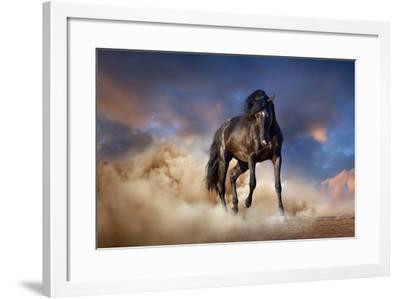 Black Stallion Horse-Callipso88-Framed Photographic Print