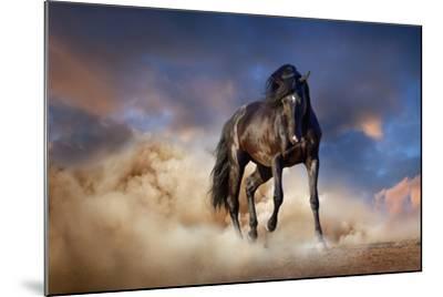 Black Stallion Horse-Callipso88-Mounted Photographic Print