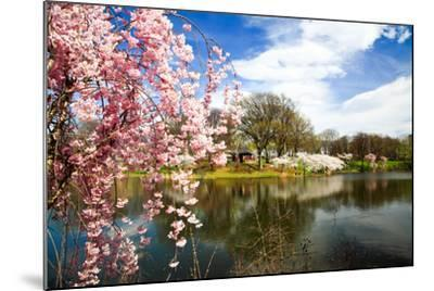 The Cherry Blossom Festival in New Jersey-Gary718-Mounted Photographic Print