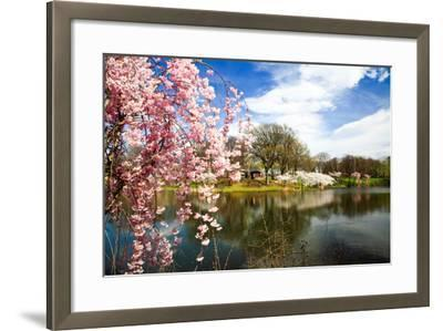 The Cherry Blossom Festival in New Jersey-Gary718-Framed Photographic Print
