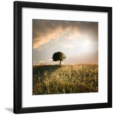 Solitary Oak Tree in the Sunset-ollirg-Framed Photographic Print