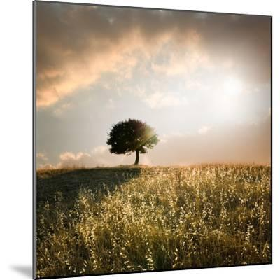 Solitary Oak Tree in the Sunset-ollirg-Mounted Photographic Print