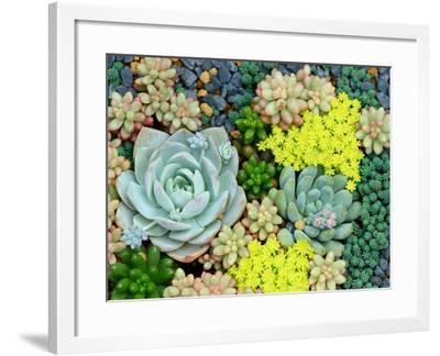 Miniature Succulent Plants-kenny001-Framed Photographic Print