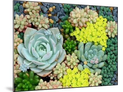 Miniature Succulent Plants-kenny001-Mounted Photographic Print