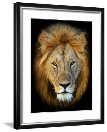 Masai Mara Lions-Kyslynskyy-Framed Photographic Print