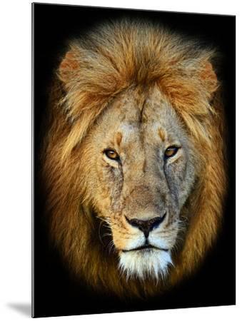 Masai Mara Lions-Kyslynskyy-Mounted Photographic Print