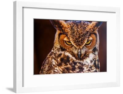 Great Horned Own-duallogic-Framed Photographic Print