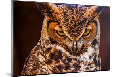 Great Horned Own-duallogic-Mounted Photographic Print