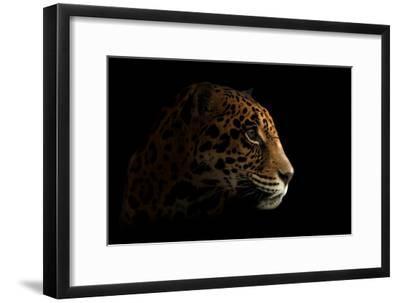 Jaguar ( Panthera Onca ) in the Dark-Anan Kaewkhammul-Framed Photographic Print