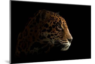 Jaguar ( Panthera Onca ) in the Dark-Anan Kaewkhammul-Mounted Photographic Print