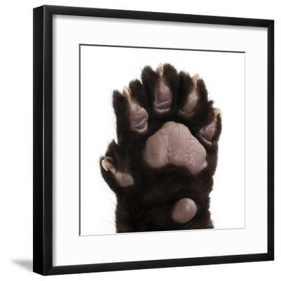 Jaguar Cub, 2 Months Old, Panthera Onca, close up against White Background-Life on White-Framed Photographic Print