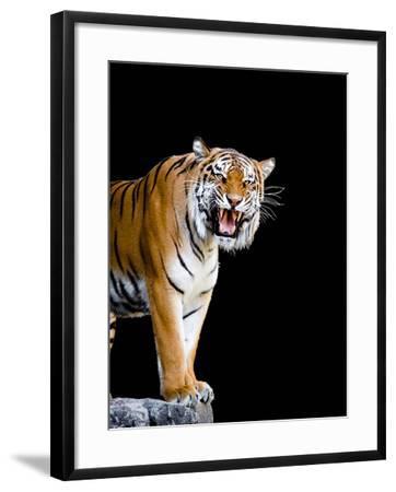 Bengal Tiger-Lipik-Framed Photographic Print