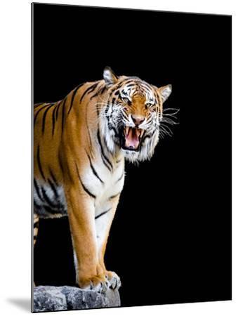 Bengal Tiger-Lipik-Mounted Photographic Print