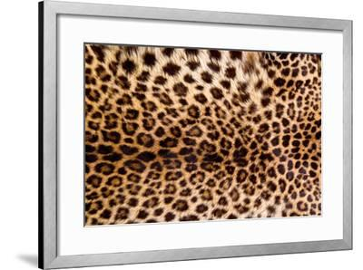 321d9ebdbcdd Real Leopard Skin. Photographic Print by William Scott | Art.com