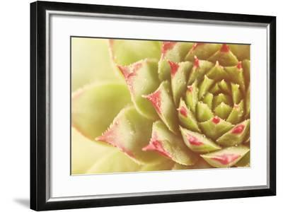 Beautiful Succulent Plant with Water Drops close Up-Yastremska-Framed Photographic Print
