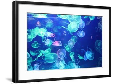 Glowing Jellyfish-zhifengyuman-Framed Photographic Print