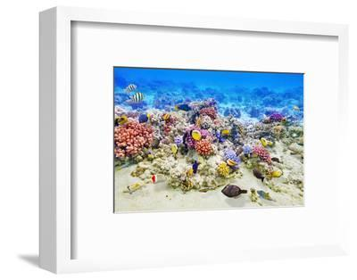 Underwater World with Corals and Tropical Fish.-Brian K-Framed Photographic Print