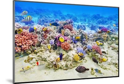 Underwater World with Corals and Tropical Fish.-Brian K-Mounted Photographic Print