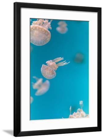 Spotted Lagoon Jelly, Golden Medusa-steffstarr-Framed Photographic Print