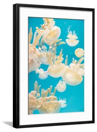 Spotted Lagoon Jelly, Golden Medusa, Mastigias Papua-steffstarr-Framed Photographic Print