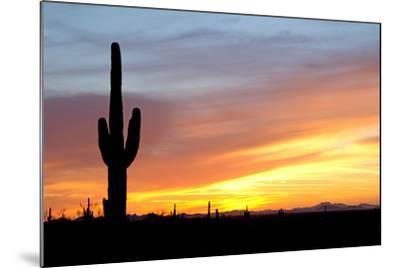 Desert Sunset with Saguaro Cactus-Christina E-Mounted Photographic Print