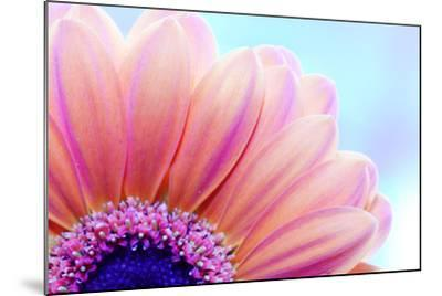 Flower Close-Up, Sunlight from Behind. Fresh, Spring Background-Michal Bednarek-Mounted Photographic Print