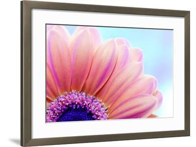 Flower Close-Up, Sunlight from Behind. Fresh, Spring Background-Michal Bednarek-Framed Photographic Print