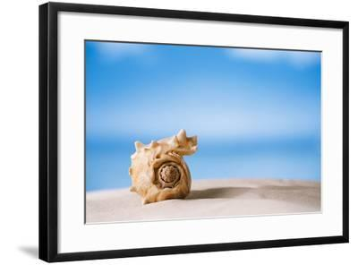 Tropical Shell on White Florida Beach Sand under Sun Light, Shallow Dof-lenka-Framed Photographic Print